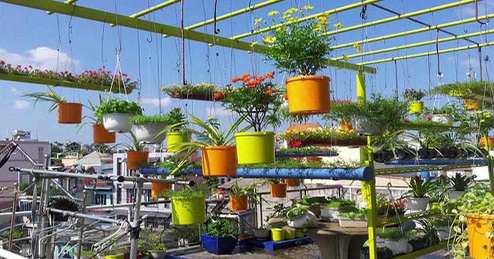 Cách trồng và chăm sóc hoa mười giờđơn giản, dễ thực hiện